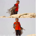 A child collecting firewood for his family on Mount Sinjar